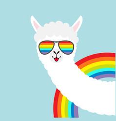 llama alpaca animal face in rainbow glassess vector image