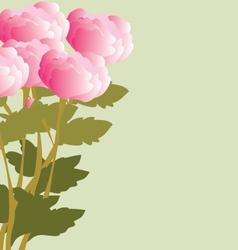 Peonies bouquet vector image