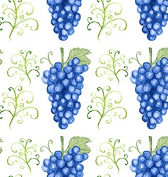 Watercolor grape in vintage style vector image