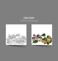 cards with tropic flower - orchid vector image
