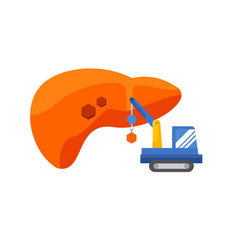liver concept regeneration of the liver vector image