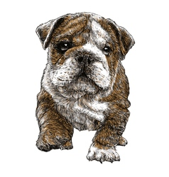 Puppy bulldogs 03 vector