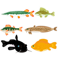 Freshwater fish on white background is insulated vector