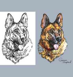 German shepherd in color and black and white vector