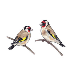 hand drawn two goldfinches sitting on branches vector image