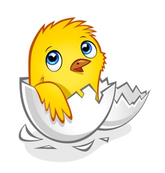 Little cute chick vector