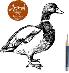 Hand drawn duck animal Sketch isolated vector image
