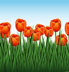 orange tulips vector image