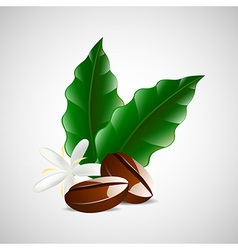 single coffee bean with leaf isolated on white vector image
