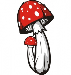 agaric mushrooms vector image