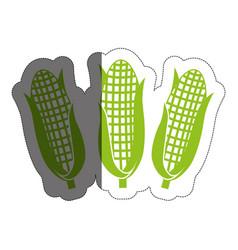 corns vegetable icon vector image
