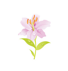 pink lily flower floral icon realistic cartoon vector image