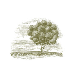 Woodcut tree and countryside vector