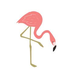 summer flamingo vector image