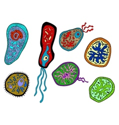 Colorful amebas amoebas microbes and germs set vector image