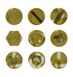 a set metal golden screws and bolt vector image