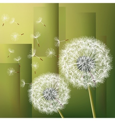 Abstract modern background with flowers dandelions vector