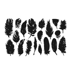 feather silhouettes collection elements vector image