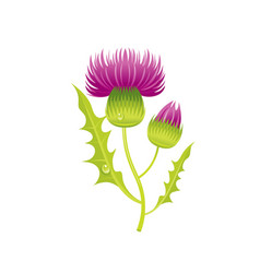 Thistle flower floral icon realistic cartoon vector