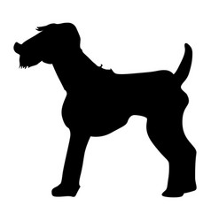 welsh terrier vector image