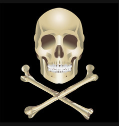 human skull and crossbones vector image vector image