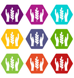 hands and ear of wheat icon set color hexahedron vector image vector image