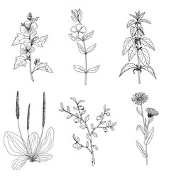 Ink drawing plant nettle vector