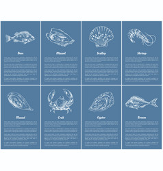 Scallop and clam posters set vector