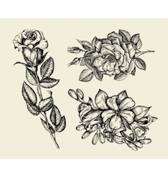 Flowers Hand drawn sketch flower rose floral vector image vector image