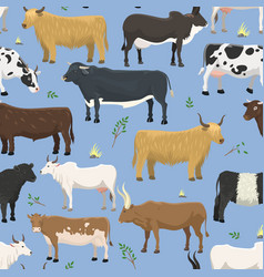 set of bulls and cows farm animal cattle mammal vector image