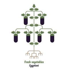 Eggplant vegetables vector