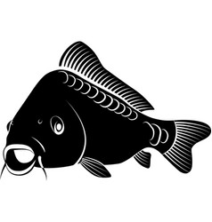 Isolated carp fish - clip art vector