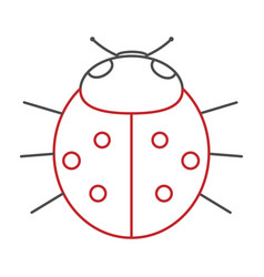 Ladybird on white background vector