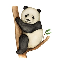 Panda watercolor isolated on white background vector