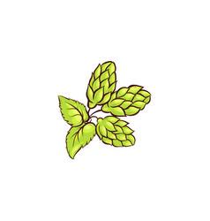 cartoon green beer hop cones with leaves vector image vector image