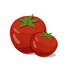 tomatoes isolated on white background vector image vector image
