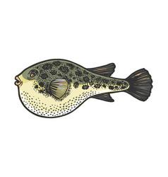 Fugu toxic fish sketch engraving vector