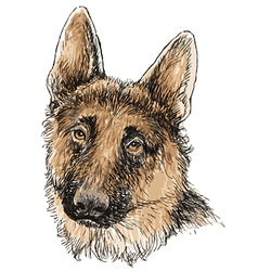 German Shepherd 02 vector