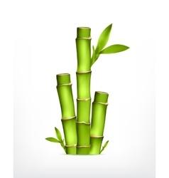 Stem bamboo vector