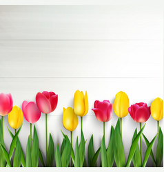 colorful tulips on white wooden table vector image