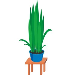 home plants vector image