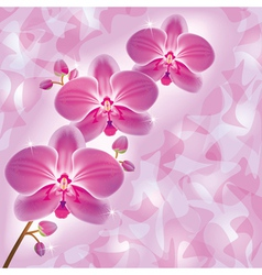 Invitation or greeting card with orchid in grunge vector image