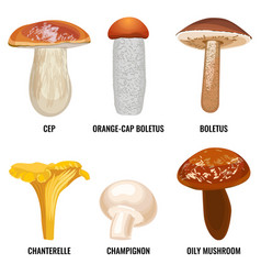 Set funguses or mushrooms vector
