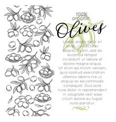 Sketch olives vector