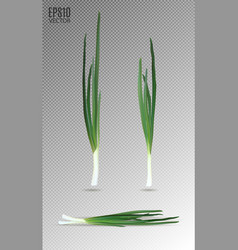 Young green onion set on transparent background vector