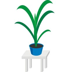 home plants in pot vector image vector image