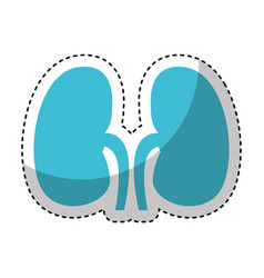 human organ kidneys icon vector image