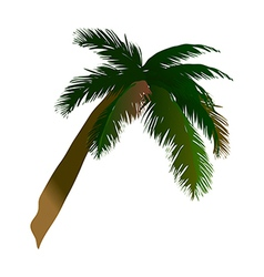 A coconut palm tree vector