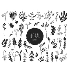 Collection of hand drawn floral elements vector image