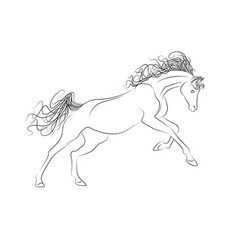 Outline drawing horses the horse gallops vector